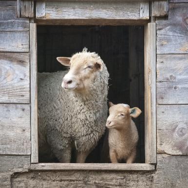 Allevamenti sostenibili per il benessere animale