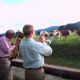 I benefici della musica sugli animali