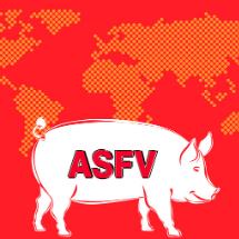 Peste suina africana: come difendere i nostri maiali